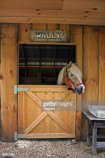 Wally das Pferd