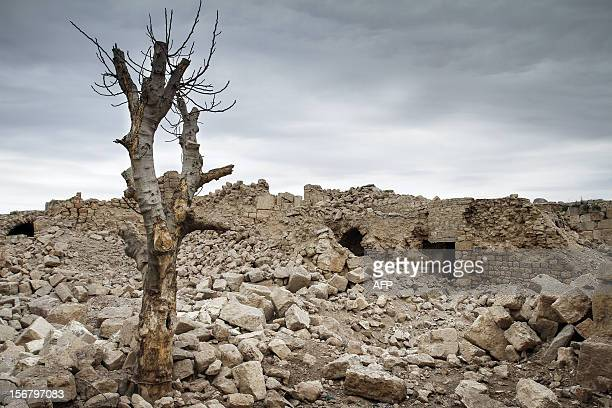 A walnut tree stripped of its branches stands in the rubble of the Kalat alNuman citadel originally built during the Roman era some 2000yearsago...