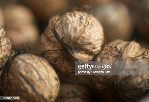 Walnuts in Schöneiche