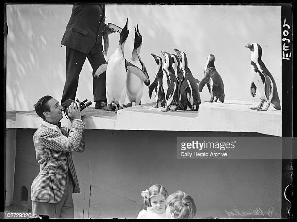 Walt Disney filming penguins at London Zoo 1935' American animation pioneer Walt Disney films the penguins at London Zoo whilst the keeper feeds them