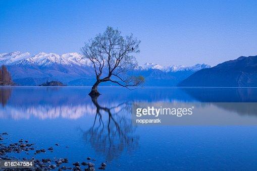 Wanaka tree in oil painting filtered : Foto de stock