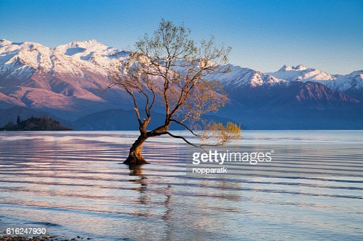 Wanaka tree in oil painting filtered : Stock Photo