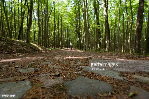Wanderin im Buchenwald im Nationalpark Jasmund on June 09 2012 in Lohme Germany