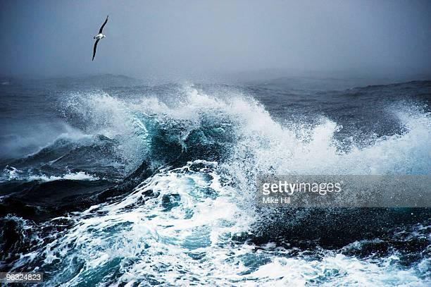 Wandering Albatross in flight over rough sea