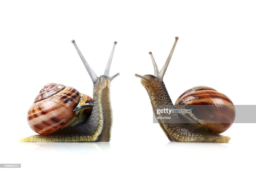 War of the Snails