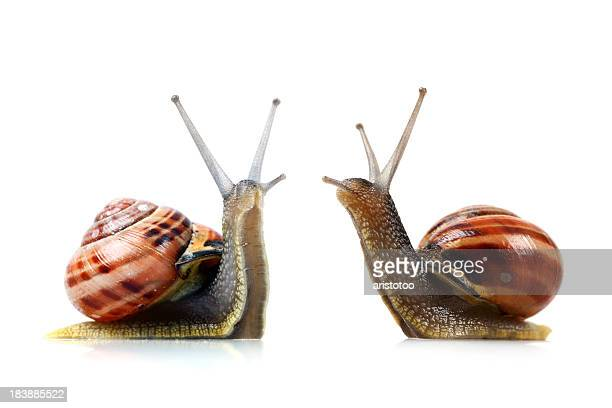 War of the Snails