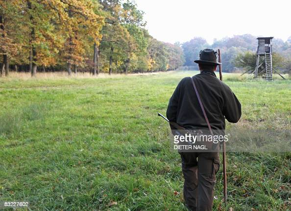 A warden walks on October 11 2008 in the Lainzer Tiergarten a 25 square kms growth forest west of Vienna that was constituted more than 200 years ago...