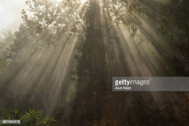 Warm autumn scenery in a forest, with the sun casting beautiful rays of light through the mist and trees, Tropical forest, Thailand