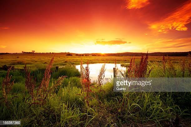 Warm glowing field