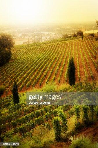 Caldo Vineyard
