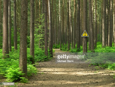 Warning sign on road by path in forest : Stock Photo