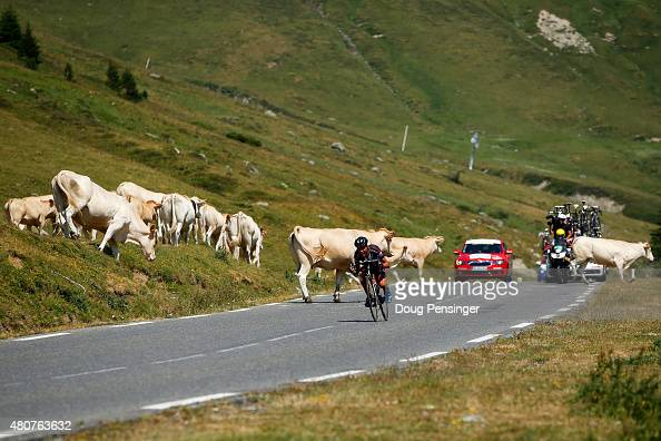 Warren Barguil of France and Team GiantAlpecin takes evasive action on the downhil of the Col du Tourmalet as cattle cross the road during stage...