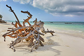 Washed-up tree trunk on Zanzibar beach