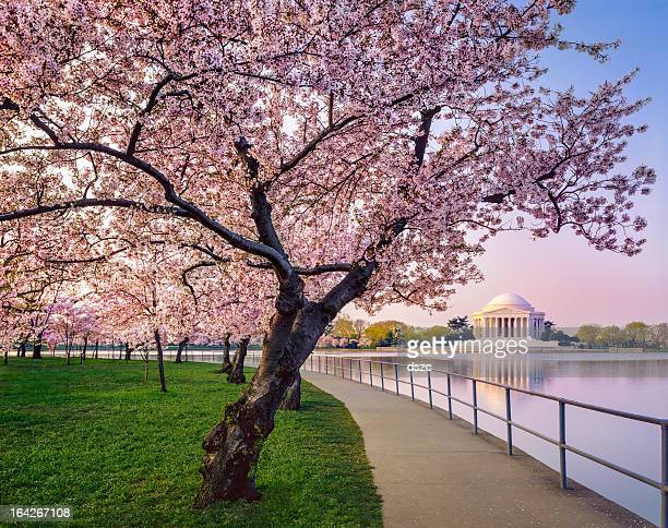 Washington DC cherry trees, footpath, Tidal Basin lake, Jefferson Memorial