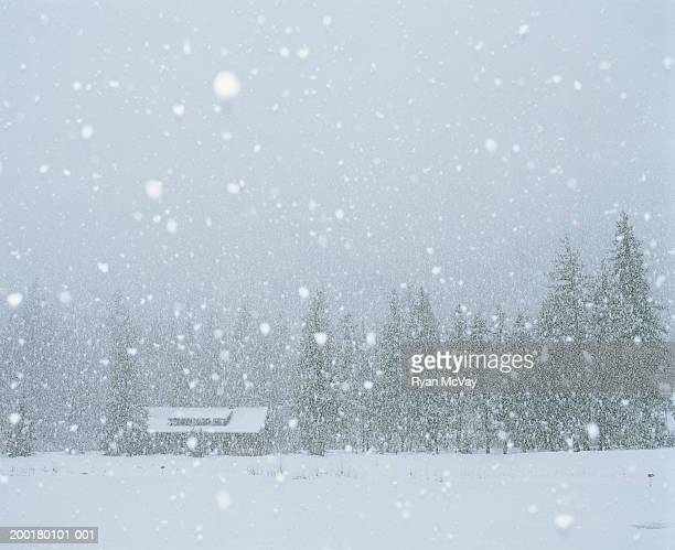 USA, Washington, Mazama, snow falling on cabin, winter