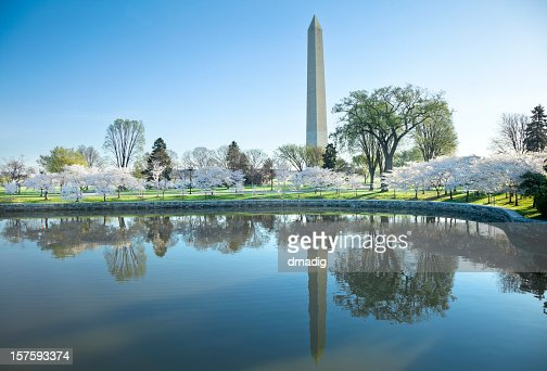Washington Monument and Cherry Blossoms Reflecting in Tidal Basin