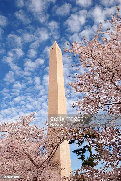Washington Monument during Spring Cherry Blossom Festival