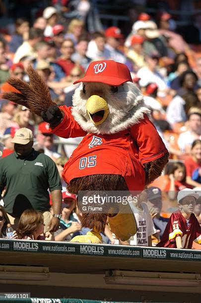 Washington Nationals mascot Screech walks on tops of the dug out during the game against the Atlanta Braves at RFK Stadium September 16 2007 in...