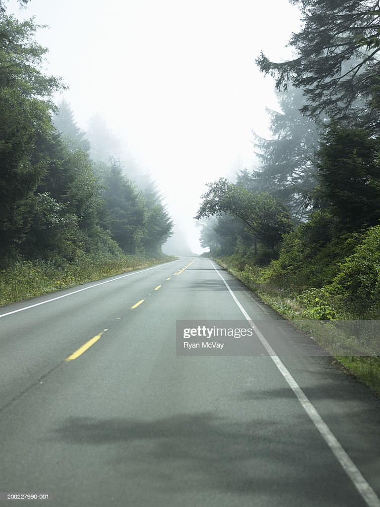 USA, Washington, Olympic National Park, fog over tree-lined highway : Stock Photo