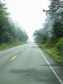 USA, Washington, Olympic National Park, fog over tree-lined highway