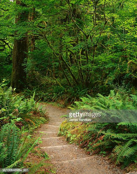 USA, Washington, Olympic National Park, Hall of Mosses Trail with vine maple and Sword ferns