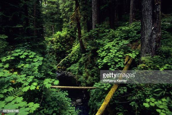 USA Washington Olympic National Park Sol Duc Falls Area Old Growth Forest