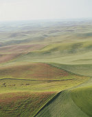 USA, Washington, Palouse, lush farmland, aerial view