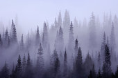 USA, Washington, Pierce County, Mount Rainier National Park, Cascade Range, Mist in  forest
