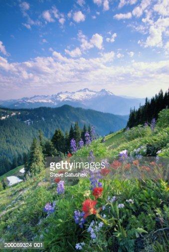 USA, Washington State, North Cascades, wildflower meadow