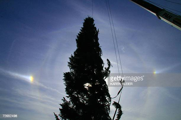 Sun dogs are seen on both sides of the Capitol Christmas tree as it is put into place on the West side of the Capitol building 27 November 2006 in...