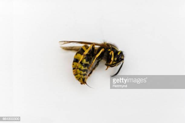 Wasp captured close-up
