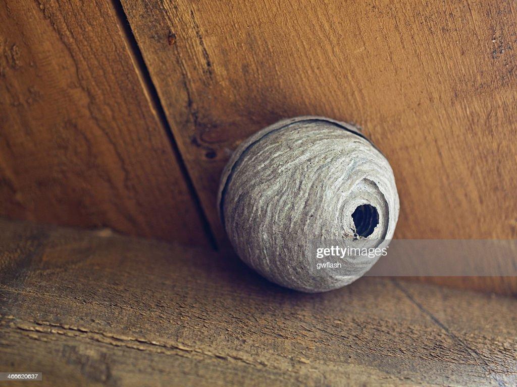 Wasp Nest in Attic  Stock Photo & Wasp Nest In Attic Stock Photo   Thinkstock