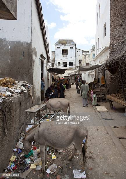 Waste in the street on March 2 2011 in Lamu IslandKenya