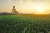 Wat Muang and rice field