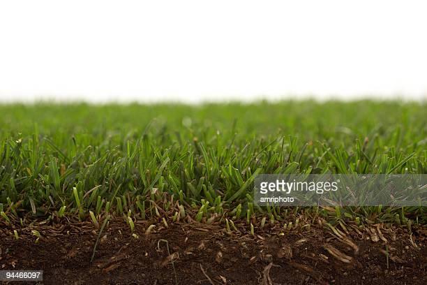 watch the grass growing