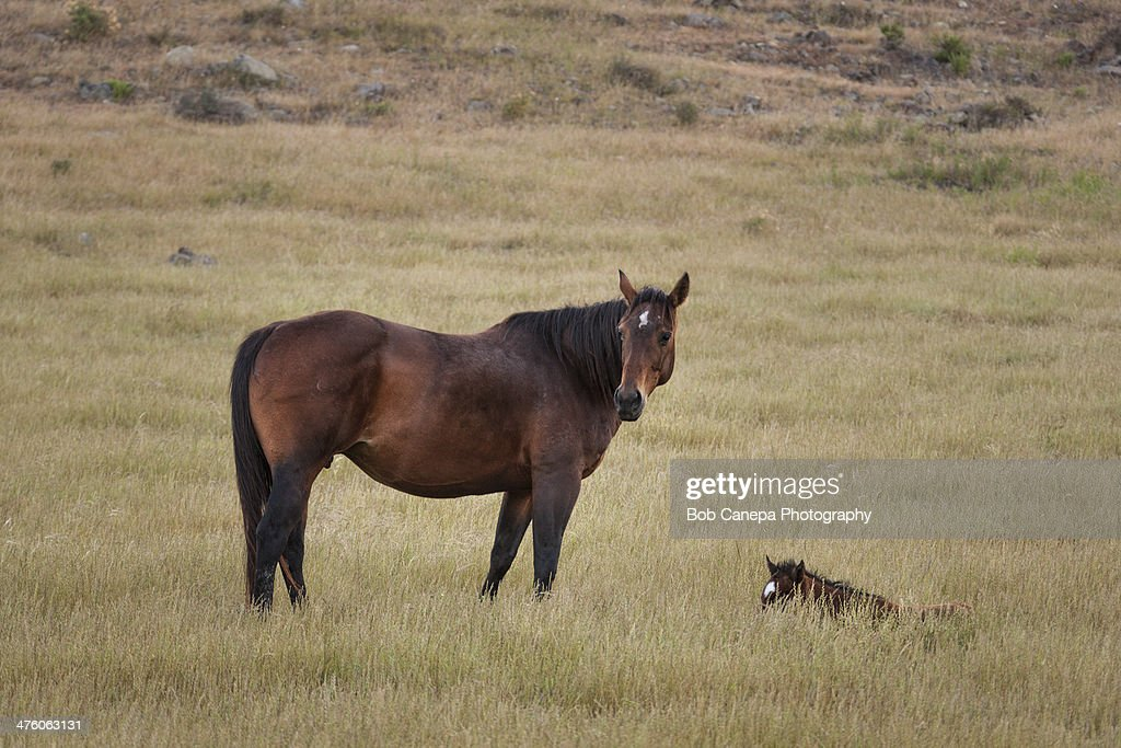 Watchful mother : Stock Photo