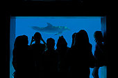 Group of people watching dolphins through the glass at an aquarium