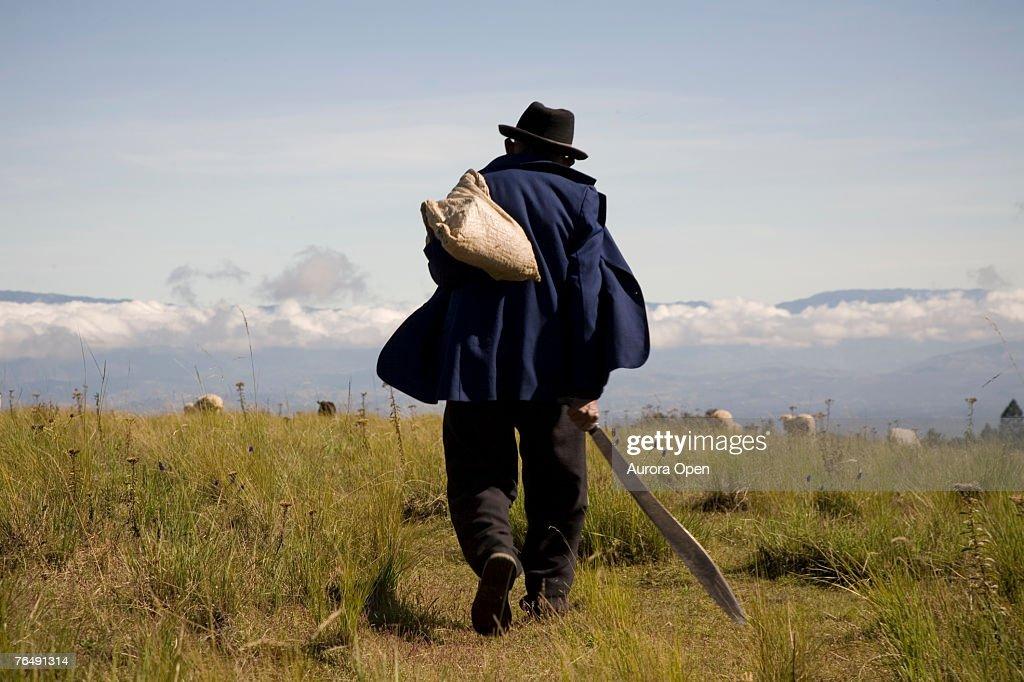 Watching his flock, a shepherd walks on a mountaintop field. : Stock Photo