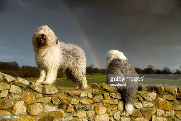 Watching rainbow..