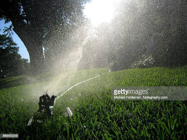 Water And Light Sprinkler In The Grass