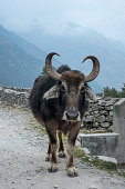 A water buffalo standing on the side of the road.