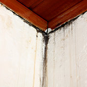 Water damage and Mould