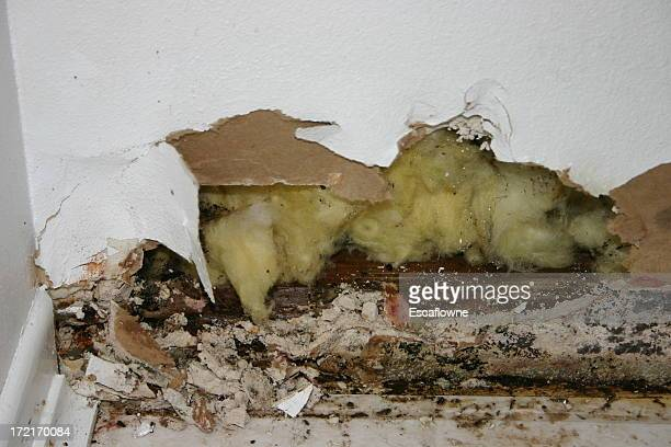 Water Damage with mold