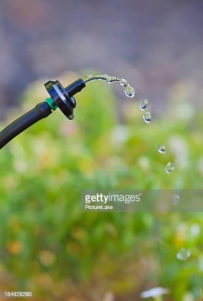 Water drip system closeup (vert)
