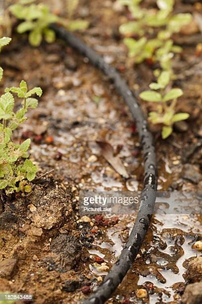 Water drip system soaker (vert, shallow DOF)