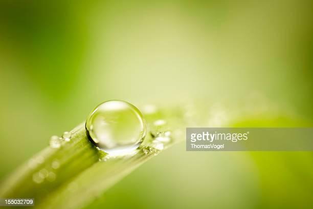 Wasser Tropfen auf grünem Gras Blatt