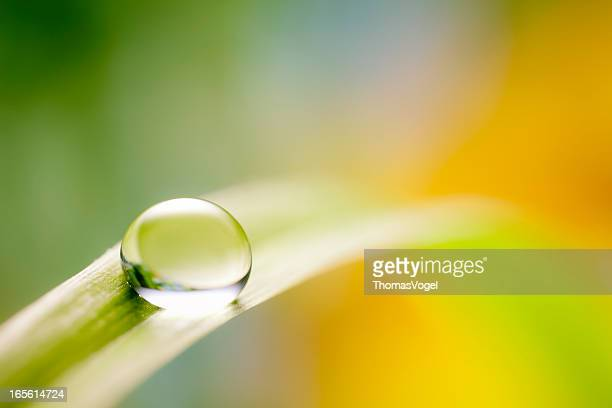 Water drop on green grass leaf