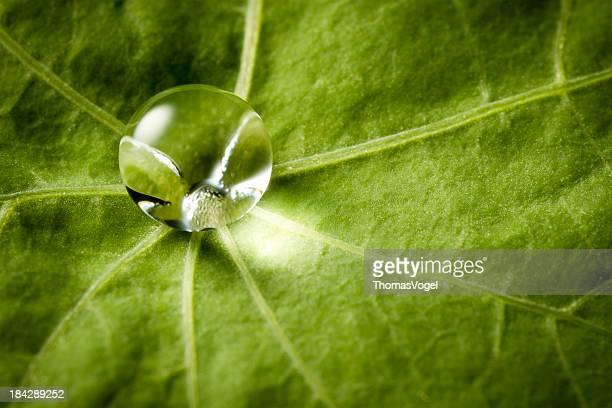 水ドロップ緑の葉
