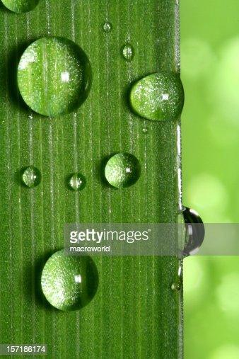 Water drop on leaf closeup