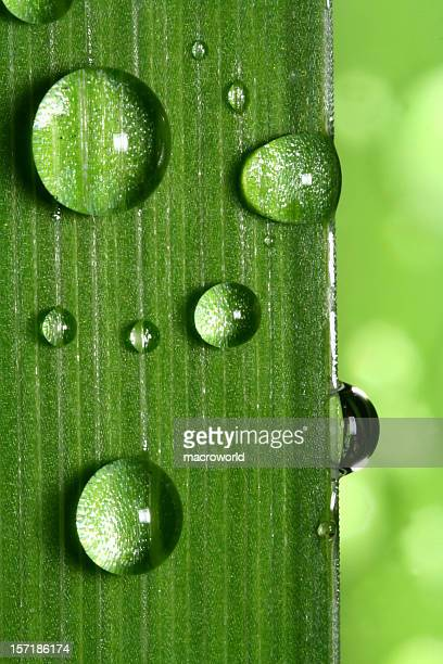 Water drop on leaf closeup